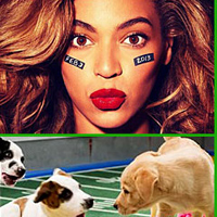 The Ultimate Guide Superbowl Weekend XLVII - Lingerie, Puppies and Football