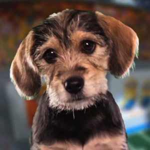 Watch: Meet Marta, MVP of Animal Planet's Puppy Bowl IX