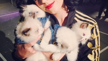 16 Cuties Cuddling Cats in Honor of National Cat Day